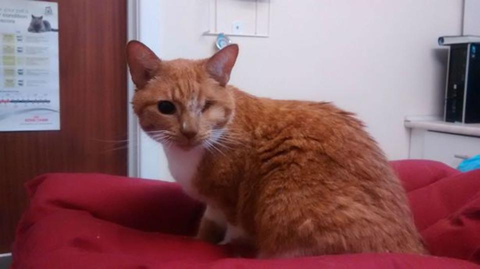 Cyrus cat rescued