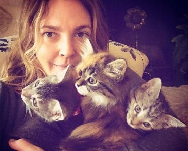 Drew Barrymore Planned To Rescue One Kitten But Ended Up Going Home With Three