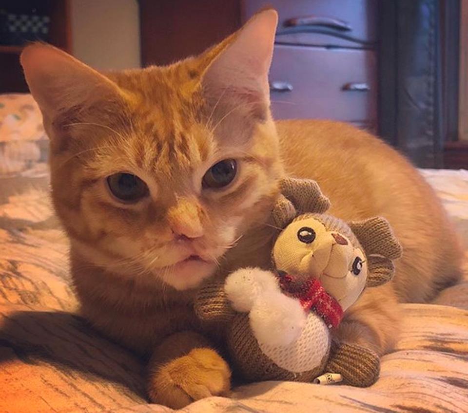 Nigel adopted