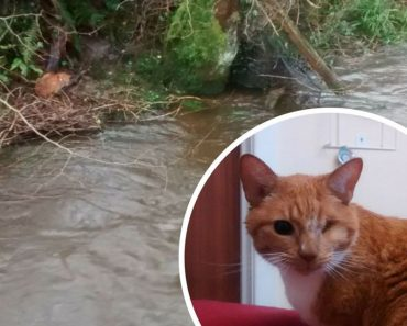 Blind Cat Was Rescued After Spending Days Stuck On A River Bank