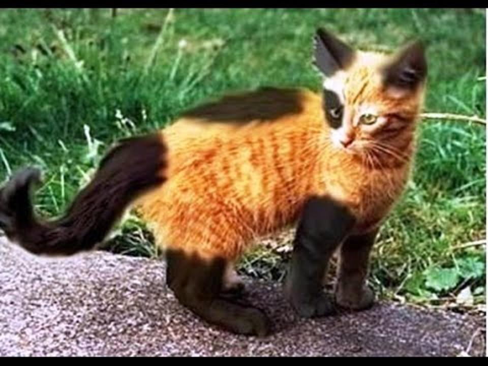 Warrior Cat Fur Colors