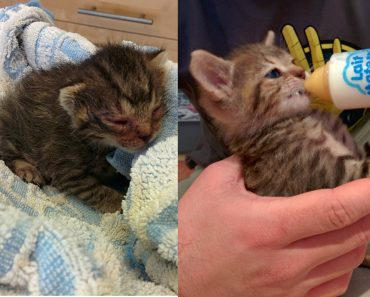 They Found A Helpless Kitten On The Ground Near The House. 8 Months Later…