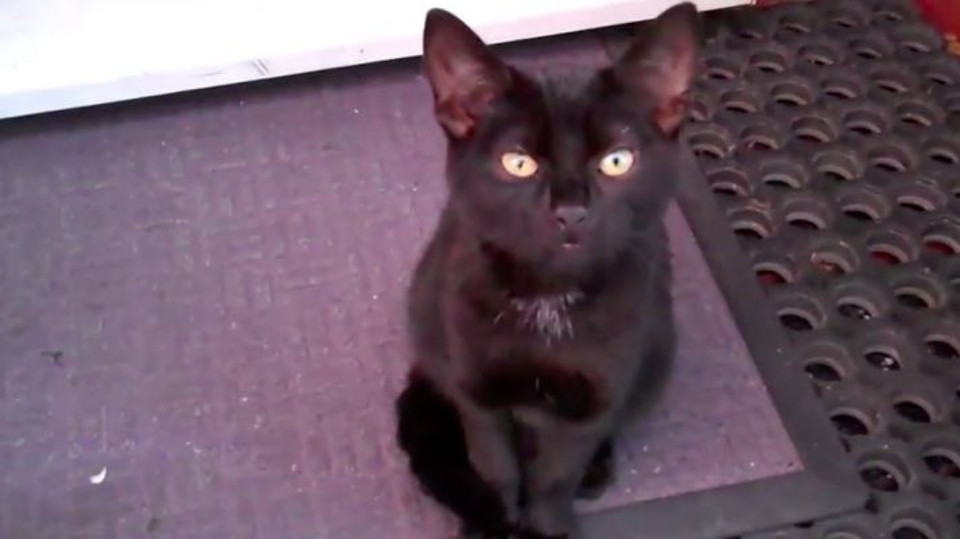 A Stray Black Kitten Shows Up At Family's Doorstep, Demanding To Adopt Him