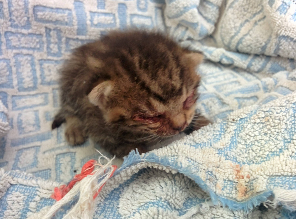 Penny the kitten