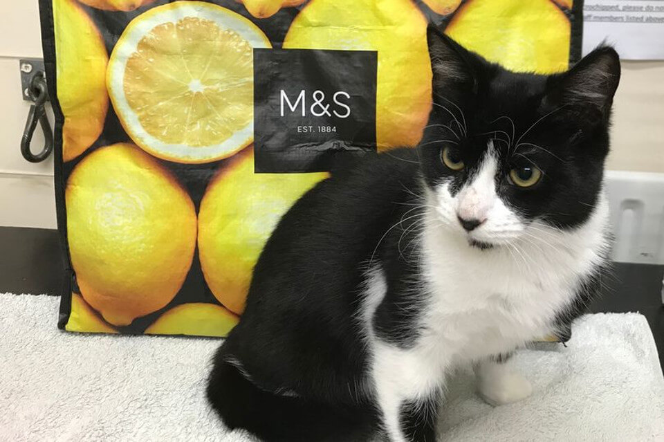Kitten Found Zipped Up In a Marks And Spencer's Freezer Bag
