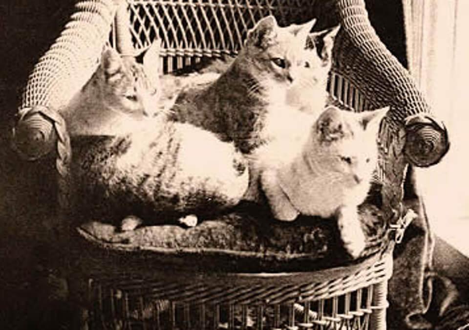 Twain cats