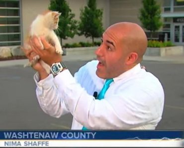 Stray Kitten Interrupts Live Broadcast and Immediately Gets Put on TV