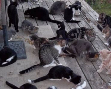 Hundreds Of House Cats Are Being 'Dumped' On Farmers