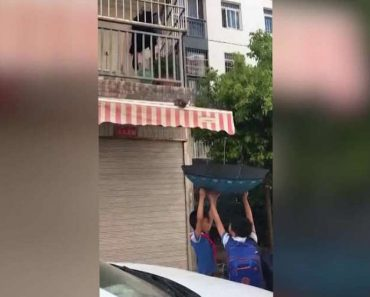 Two Kids Used An Umbrella To Save A Kitten Trapped On a Canopy