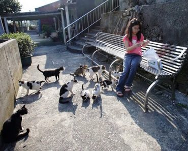Village in Taiwan Has Been Taken Over By Hundreds Of Cats