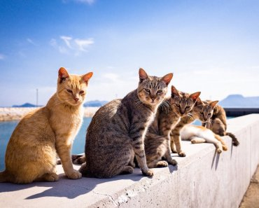 Where Is The Island Full Of Cats?